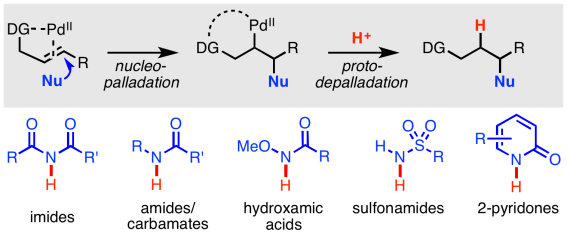 hydroamination review